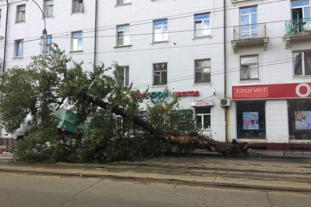 Водители трамваев признаются, что это дерево давно стоит, накренившись над проезжей частью.