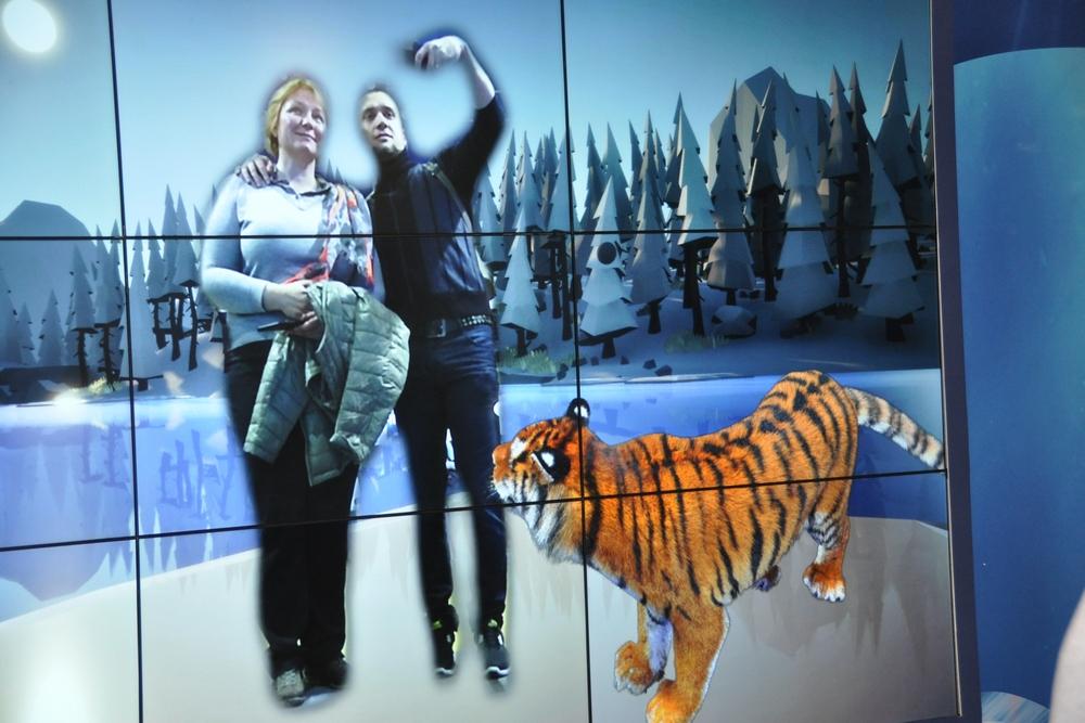 Амурский тигр - сокровище уссурийской тайги.