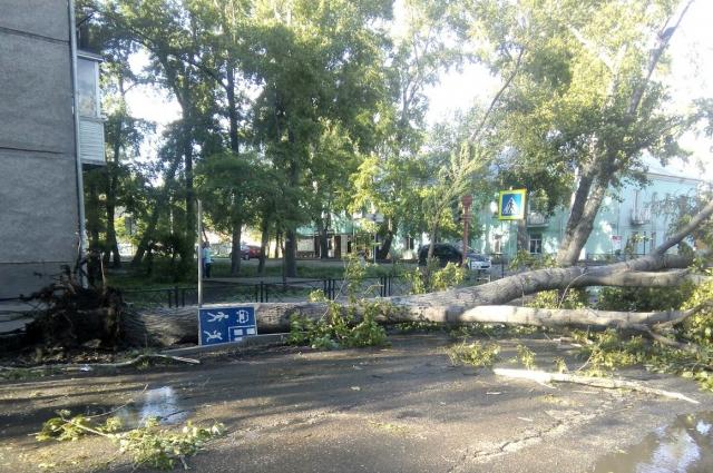 В Хакасии ветром ломало деревья.