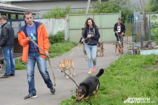 Волонтеры гуляют с животными.