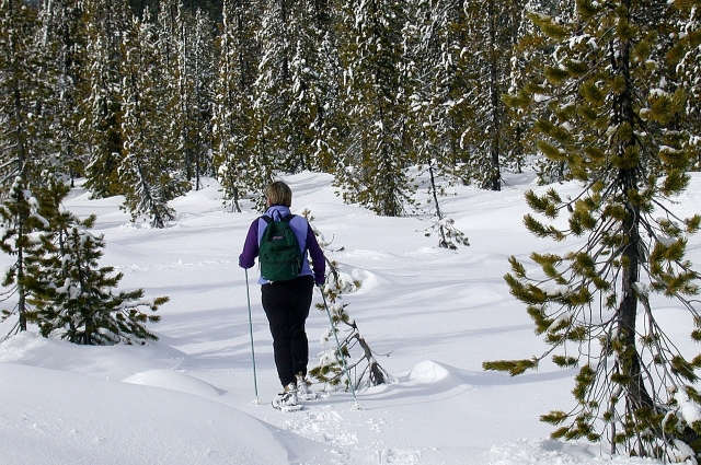 На снегоступах можно прогуляться по лесу.
