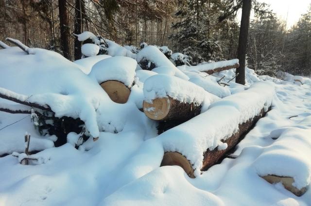 пермяки заметили, что деревья на участке уже начали вырубать.