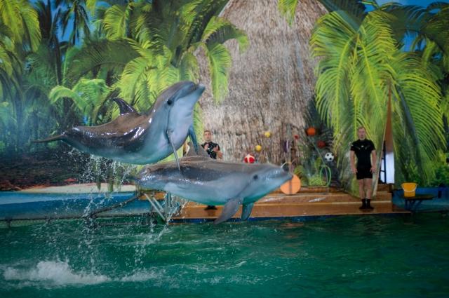Дельфины здесь творческие - могут даже... нарисовать картину.