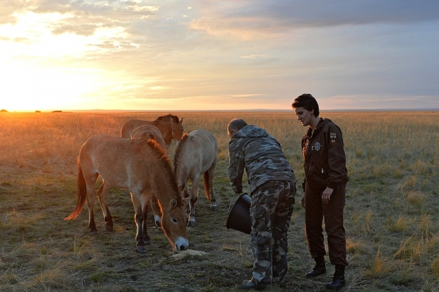 Президент покормил овсом животных.