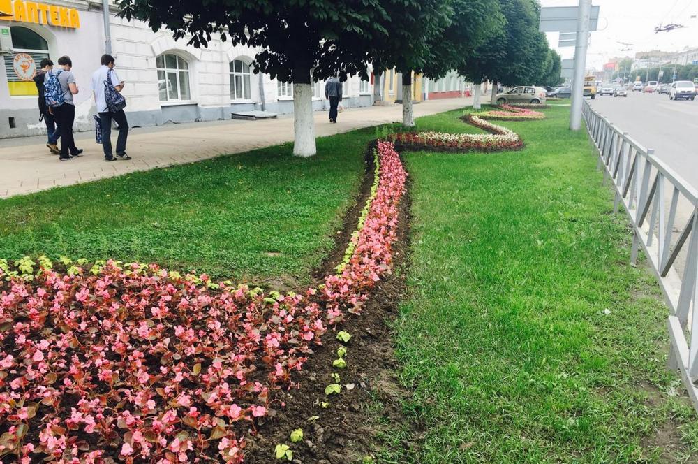 неординарного растения на улицах города фото творческие студии