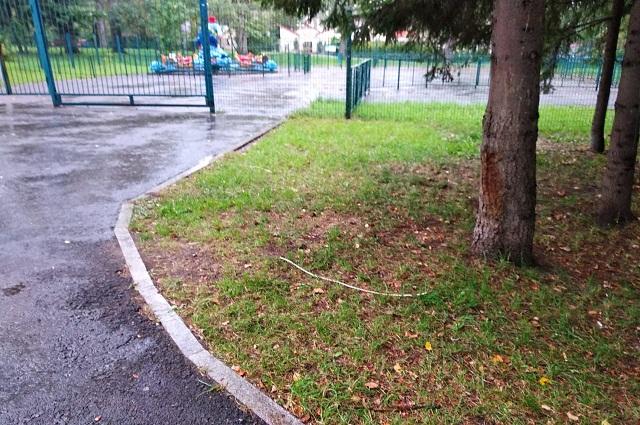 Кабель в парке