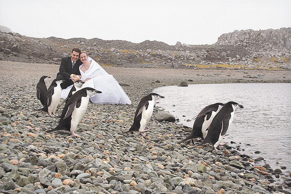 Пингвины приходят к храму слушать колокольный звон.