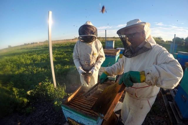 В Карелии живут 2 вида пчёл