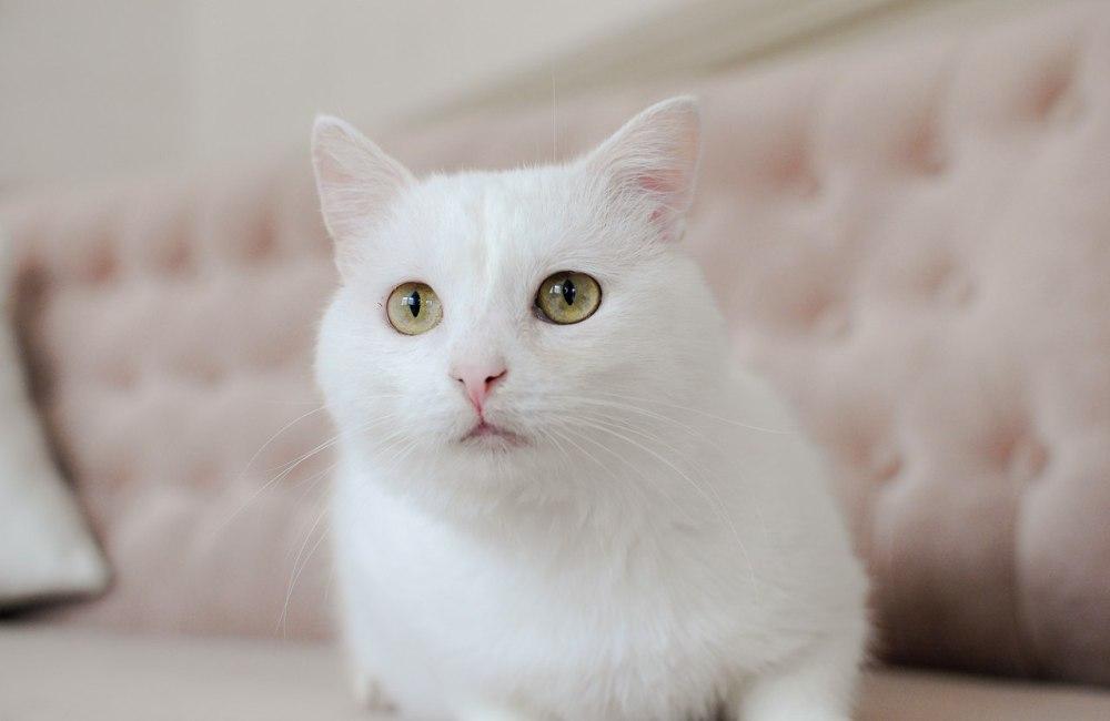 Проблема с глазом не мешает Альбусу быть очень симпатичным.