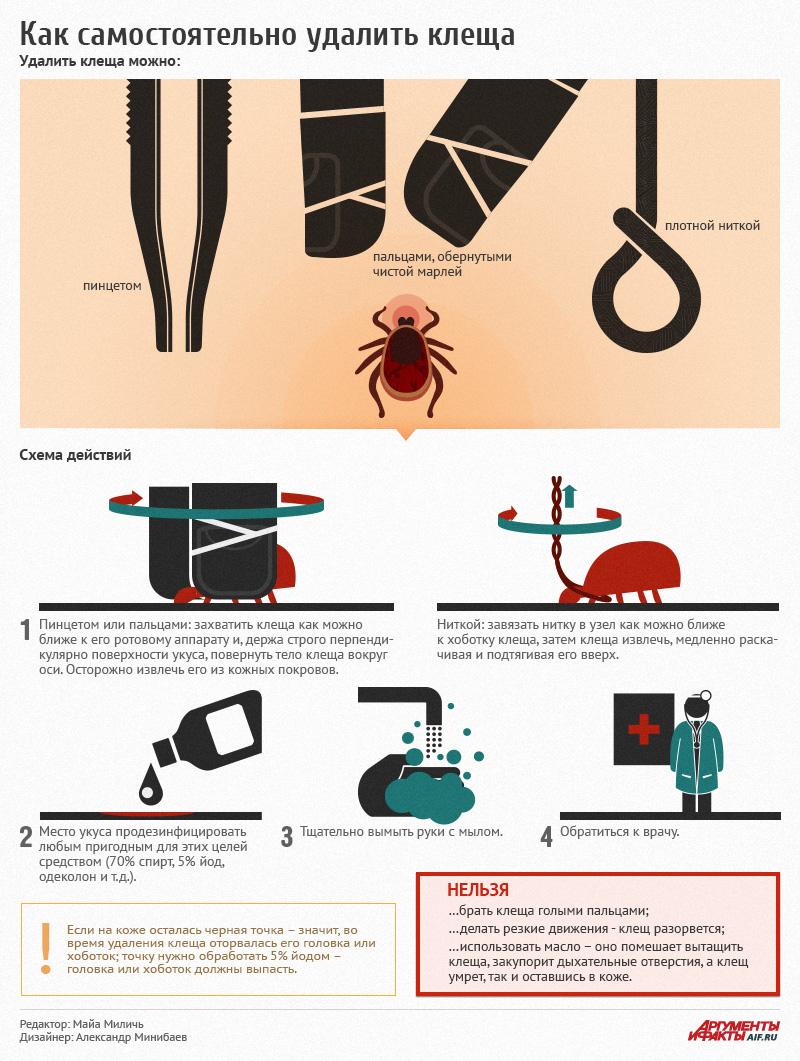 Что делать, если укусил клещ, инфографика