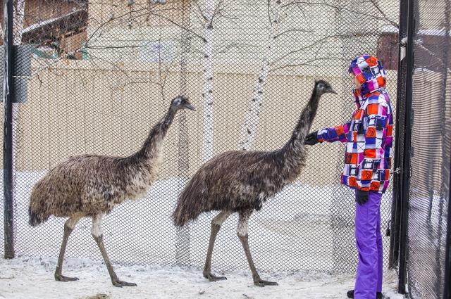 И зимой, и летом работники зоопарка внимательны к самочувствию животных.