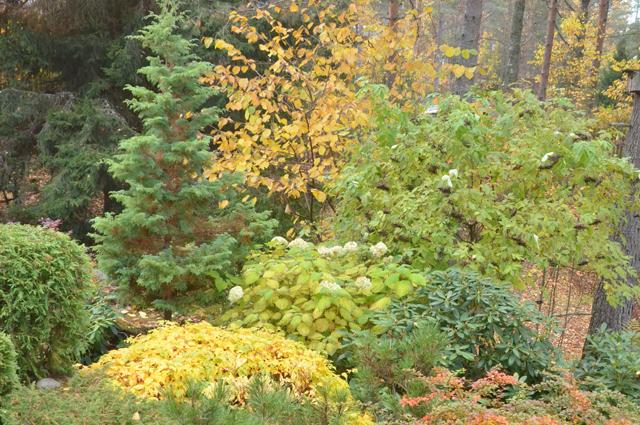 Осень, сад, дача