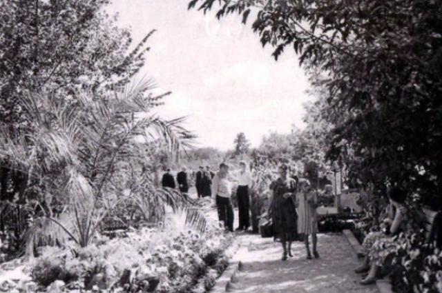 Городская выставка на территории «Декоративных культур». 1950-е