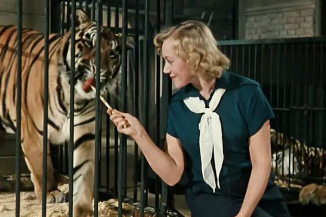 Касаткина уже не боялась самостоятельно кормить тигра мясом с палочки