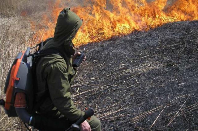 Пожар в лесу уничтожает всё живое, после стихии на этом месте воспроизведение возможно толдько спустя несколько лет.