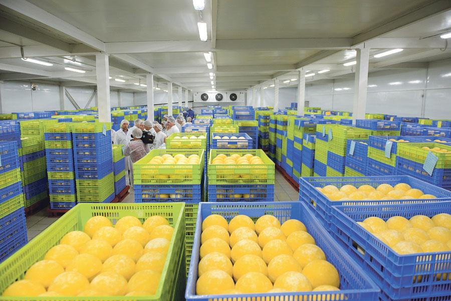 Продукция бобровских сыроваров известна далеко за пределами региона.