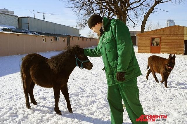 Сергей общается с пони