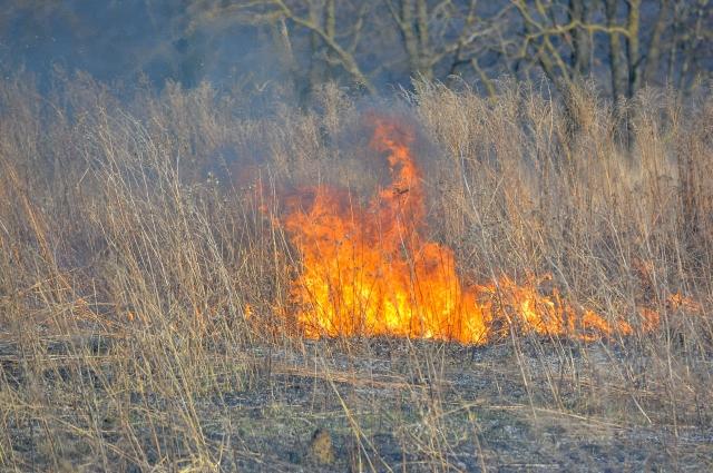 Пожар - это огромный стресс для всего живого.