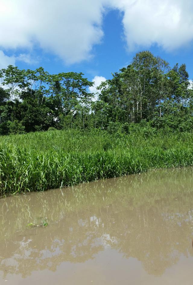 Везде непролазные джунгли, кроме как по реке, до города не доберешься