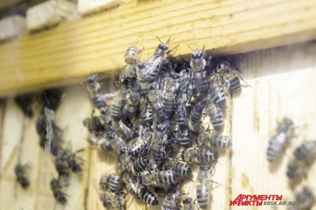При 38-40 градусах мёд теряет свои полезные свойства.