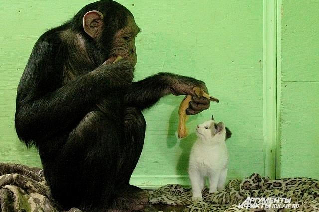 Лея рада предложить своему подобечному любое лакомство. Даже банан.