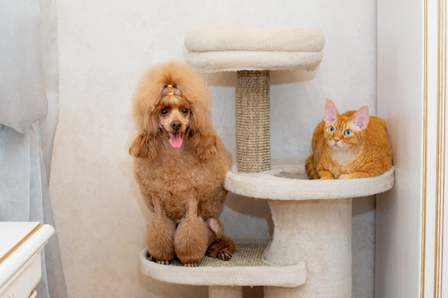 Профессиональный уход за шерстью важен для здоровья собаки.