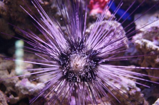 В океанариуме много интересных экспонатов.
