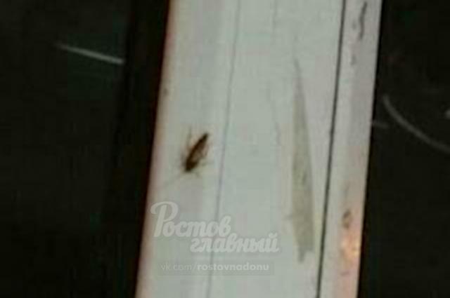 В торговой точке, где готовят шаурму, ползают тараканы.
