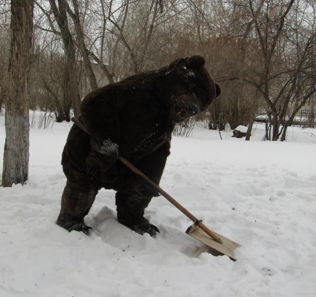 Рукотворный медведь гуляет по улицам Артёмовского.