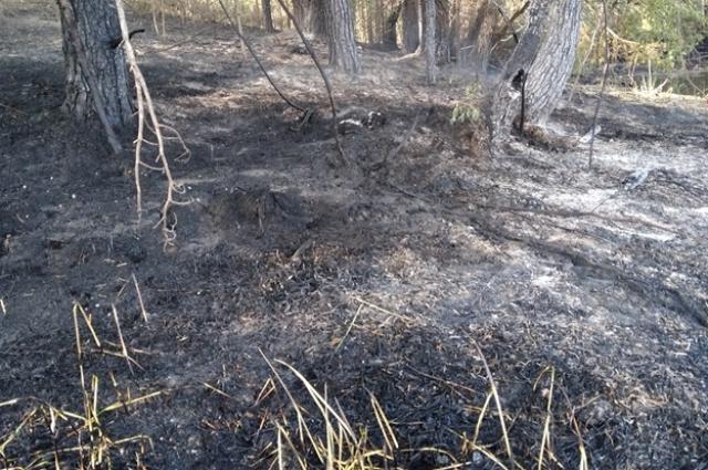 Огонь мог разгореться от оставленного рыбаками костра.