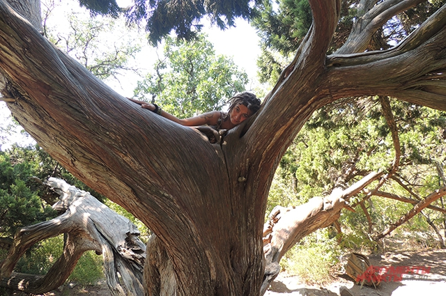 Ева утверждает, что старое дерево можжевельника, которое на Утрише называют Лотосом, дарит ей спокойствие