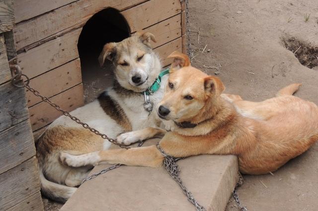 Зачастую домашнее животное заводят как игрушку, не осознавая ответственности.