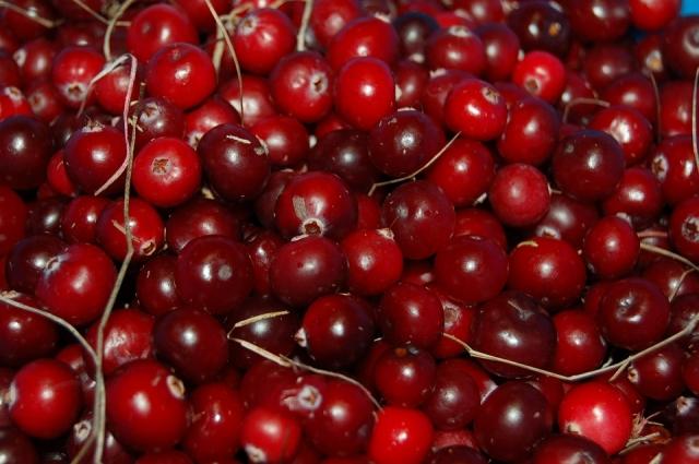 Клюква - вкусная и полезная ягода.