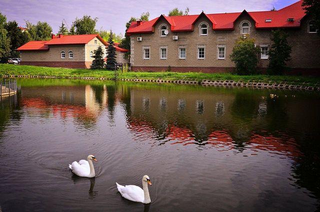 Лебеди в саду имени Сергея Аксакова.