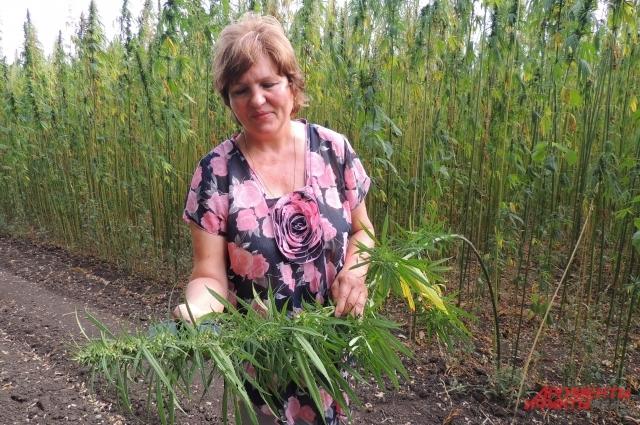 Татьяна Сухорада занимается селекцией конопли 43 года и знает об этой культуре практически все.