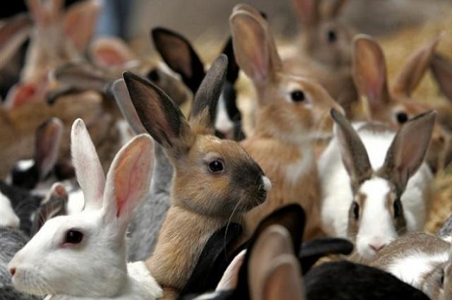 Кролиководство стало успешным