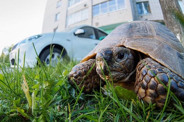 Жители региона ловят черепах и держат их в квартирах как домашних животных. Рептилии приобретают много болезней в неволе.