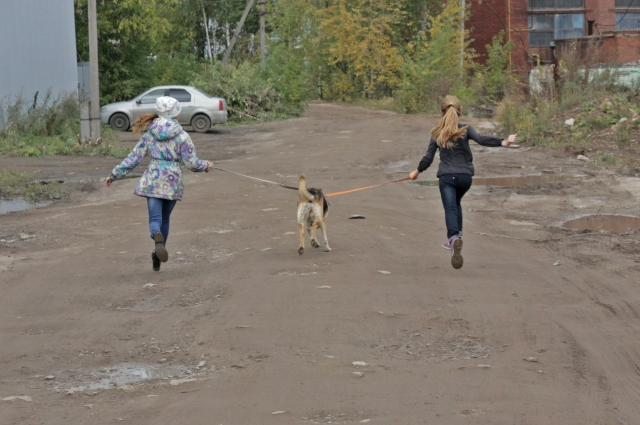 Самых активных собак Даша и Полина выгуливают вдвоём.
