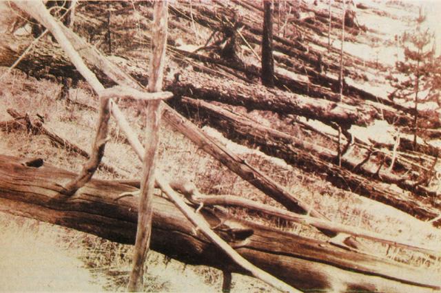 «Ореольный бурелом» в районе тунгусского события. По материалам экспедиции Л. Кулика, 1929
