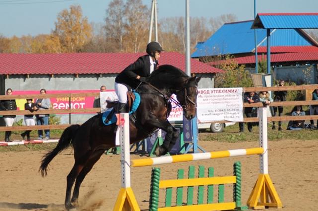 В Кузбассе лошадей в 31 раз меньше, чем свиней.