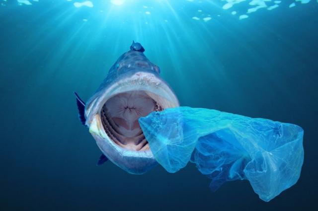 Пластик - беда всех морей и океанов.