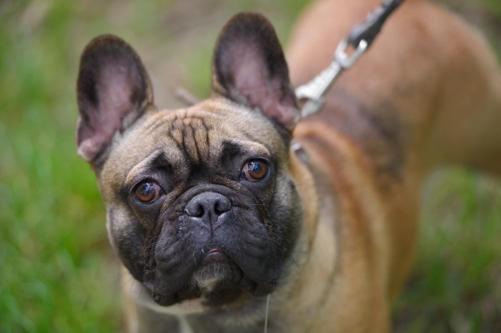 выставка собак к Майкопе