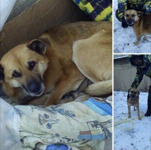 Бездомный пёс обрёл кров благодаря доброму бомжу и неравнодушным горожанам.