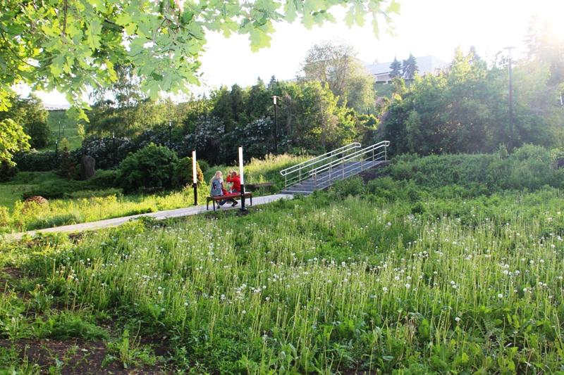 На сегодняшний день главное растение парка - одуванчик.