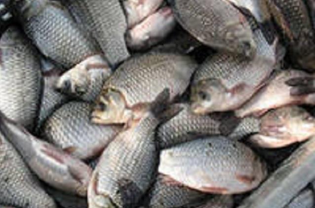 Речная рыба может вызвать серьезное заболевание.