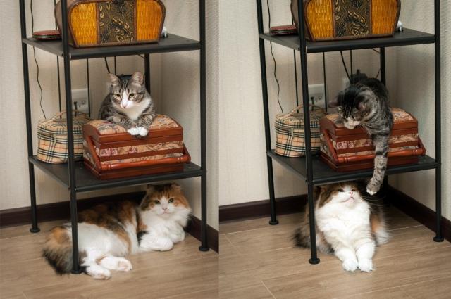 Маруся и Нюша косвенно помогли найти дом многим другим котам.
