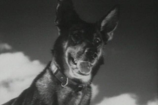«Джульбарс», 1935.