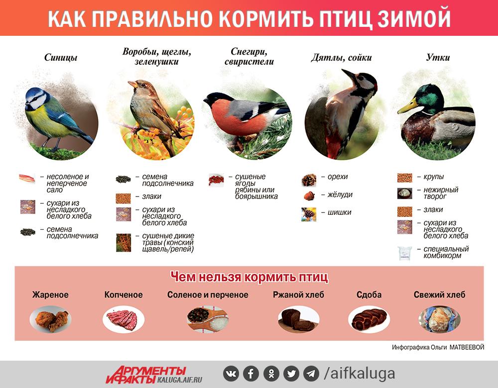 Чем кормить птиц зимой. Инфографика