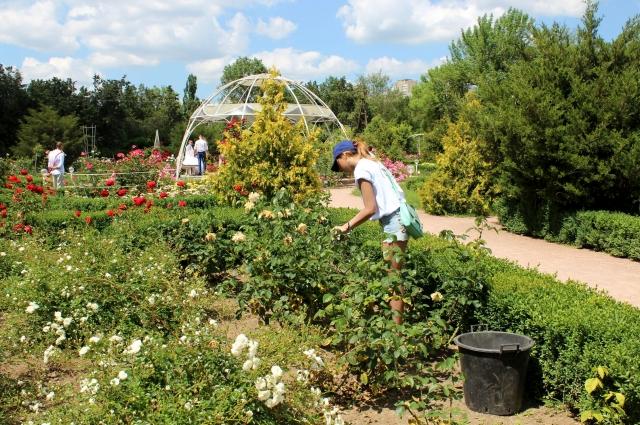 Уход за растениями в розарии Ботанического сада КФУ.