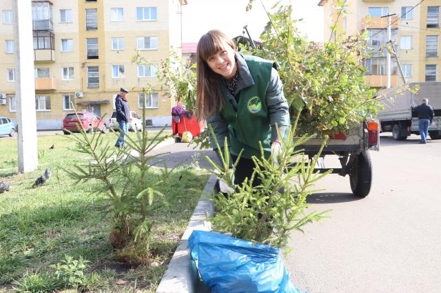 Деревья во дворах высаживают вместе работники предприятий, экологи Междуреченска и жители.